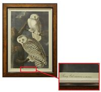 "AFTER J.J. AUDUBON (AMERICAN, 1785-1851) ORIGINAL PRINT ""BIRDS OF AMERICA"" OWLS"