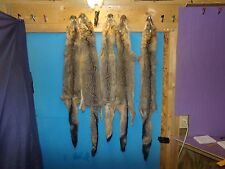 1 Tanned Grey Fox Fur Pelt real animal skin taxidermy rug piece man cave F23