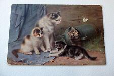Carte postale chat - Cat postcard -