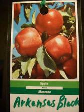 4'-5' ARKANSAS BLACK Apple Fruit Tree Plant Trees Grow Fresh Crisp Apples Garden