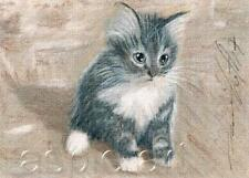 ACEO print limited edition grey kitten cat by Anna Hoff
