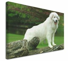 More details for pyrenean mountain dog x-large 30