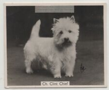 West Highland White Terrier 1930s Champion Dog Breed Canine Pet Ad Trade Card