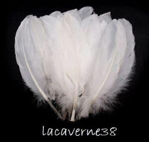 10/40/100 Plume d'oie longue 15 - 21 cm blanc blanche création décoration Noël