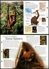 Orang-Utan #15 Mammals - Discovering Wildlife Fact File Fold-Out Card