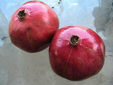 10 Pomegranate Seeds An Unusual Edible Fruit Tree
