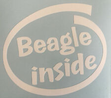 BEAGLE INSIDE DOG ON BOARD CAR WINDOW STICKER DECAL IN WHITE ALL COLOURS MADE