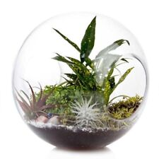 New Chive Wind Tunnel Glass Planter - large terrarium centerpieces / decor