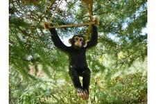 Climbing Monkey Tree Hanging Garden Tree Ornament Statue Sculpture 71cm