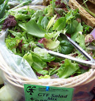 lettuce, GOURMET LETTUCE MIX, salad greens, 100 seeds! GroCo US USA*