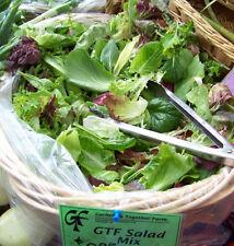 lettuce, GOURMET LETTUCE MIX, salad greens, 100 seeds! GroCo*