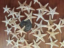 100 pcs. Natural  Real Mini Tiny Flat Starfish 15-22mm