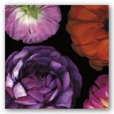 Ranunculus II Left Pip Bloomfield Art Print 18x18