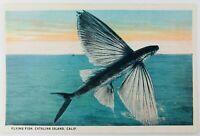 Vintage Catalina Island California CA Flying Fish Postcard