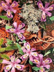 "Fine Art Photography Flowers Glenn Jahnke 15"" x 20"" LARGE"