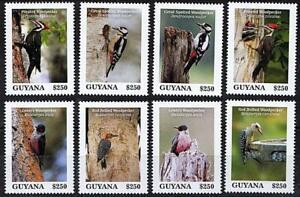 👉 GUYANA 2020 BIRDS / WOODPECKERS MNH