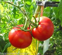 VEGETABLE - TOMATO RED JUPITER F1 - 60 SEEDS - determinate