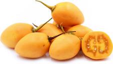 🍅 10 GRAINES TOMATE EN ARBRE (Cyphomandra betacea 'yellow') TAMARILLO SEEDS
