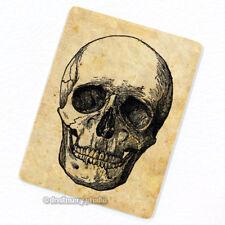 Skull #3 Deco Magnet, Decorative Fridge Anatomy Antique Medical Illustration