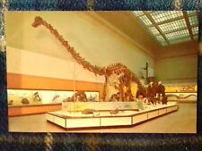 Postcard - Diplodocus, Smithsonian Institute, Usa (P191464)