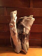 "Beautiful 8"" DRIFTWOOD Piece Terrarium Taxidermy Aquarium Beach Wood DECOR"