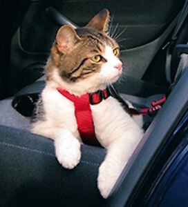 1294 Trixie Cat Car Harness Attaches To Seat Belt Lock RED