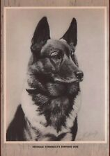 GERMAN SHEPHERD DOG owned By Reginald Vanderbilt   GEORGE FORD MORRIS 1952 PRINT
