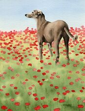Greyhound Poppies Dog 8 x 10 Art Print by Artist Djr