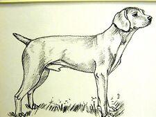 Gladys Emerson Cook 1962 VIZSLA HOUND Vintage Dog Art Print Matted