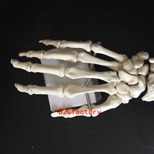 Hand Joint Anatomical Skeleton Model Human Medical Anatomy Life Size For Sale