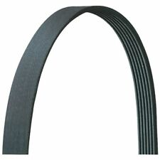 Serpentine Belt-Natural AUTOZONE/ DURALAST-DAYCO 955K6