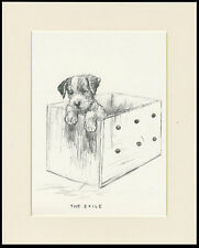 WIRE FOX TERRIER PUPPY IN A BOX LOVELY 1930'S DOG ART PRINT by KF BARKER MOUNTED