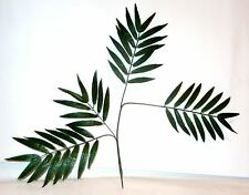 Palmenzweig mit 4 Stielen  Länge ca.  70 cm  Palmenblatt / Palmblatt Palmenwedel