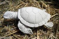 Latex mini sea turtle mold looking left plaster cement mould