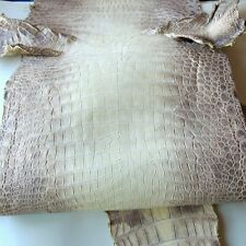 Himalayan Crocodile Skin Leather Hide Exotic Skin Craft Supply Size 44cm