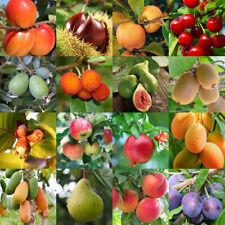 Piante da frutta di 2/3 anni in vaso diverse varietà disponibili MADE IN ITALY