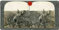 Russia ~ TILLING FIELD w/ HORSE DRAWN PLOW YOUNG BOY BARE FEET ~ 18101 ve487d fx