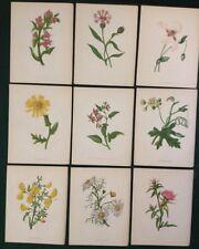 Lithograph Original Botanical Art Prints
