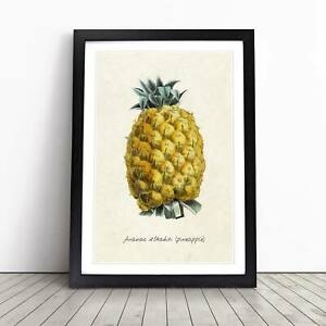 Illustration of a Pineapple Vintage Framed Picture Print Home Décor Wall Art