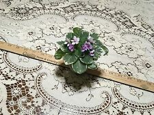 ~ African Violet ~ Knight Magic ~