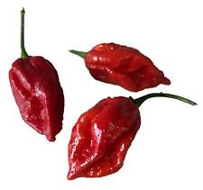 HOT CHILLI PEPPER  NAGA VIPER 10 FINEST SEEDS