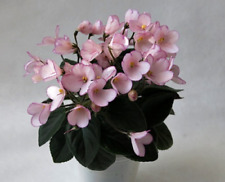 African Violet  N-Duimovochka   Rus / Ukr ,starter plant  Miniature, in bud