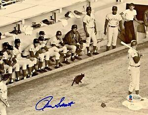 Chicago Cubs Ron Santo Signed 8x10 Black Cat Photo Beckett BAS COA
