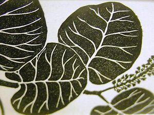 Don Blanding 1942 FLORIDA IVY w SEED POD FLOWERS Art Deco Botanical Print Matted
