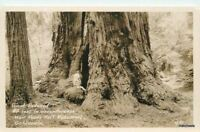 1930s Muir Woods National Monument Giant Redwood CALIFORNIA RPPC postcard 583