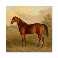Troye Kentucky Woodpecker 1834 Brown Horse Painting Large Wall Art Print Square
