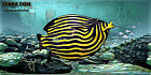 """Next level digital NFT - FISH WITH ATTITUDE by Mike Quinn - """"Zebra Fish"""" 5/10"""