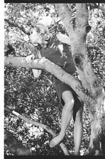 BEWITCHED ELIZABETH MONTGOMERY IN TREE 67 ABC TV PHOTO NEGATIVE