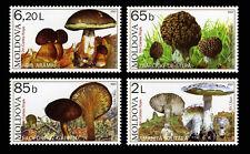 Moldova 2007 Mushrooms 4 MNH stamps