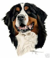 BERNESE MOUNTAIN DOG watercolor ART signed DJ Rogers